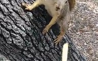 Guy Teases Squirrel With French Fry, Gets Way More Than He Bargained For