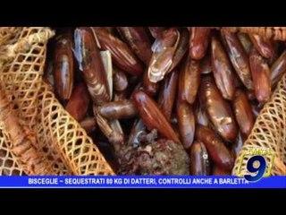 Bisceglie | Sequestrati 80 kg di datteri, controlli anche a Barletta