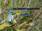 Les animaux en farandole: saison 1: épisode 14