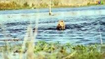Labrador Retriever Vs Golden Retriever In HIndi | Dog Comparison | The Ultimate Channel