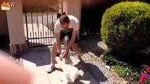 Clip Hài   Người yêu không có nhưng chó thì phải có một con