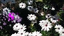 Se hace rápido Flores de Primavera faciles uñas de los pies/Floral design toe nail art