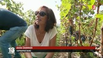Gironde : le Château Réaut invite ses copropriétaires à venir faire les vendanges