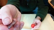Extring seeds and growing strawberry plants using a fresh fruit!