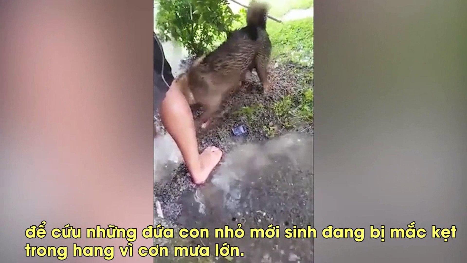 Mưa lớn ngập hang, chó mẹ phi thường giải cứu 3 cún con đang thoi thóp