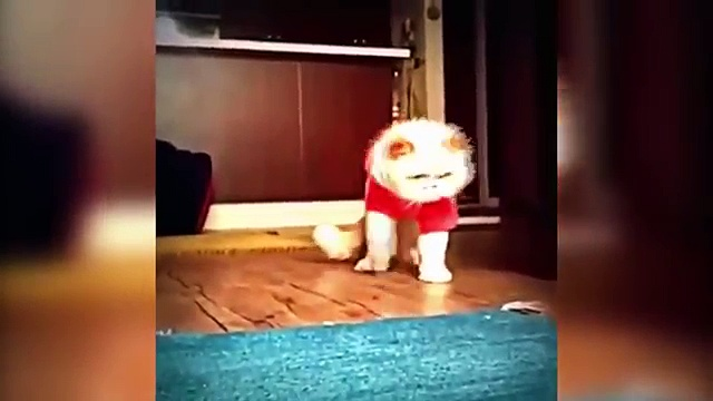 TOP Funny cat dancing and Singing in the World compilation cat dancing videos 2016