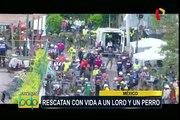 Terremoto en México: rescatan a un loro y un perro atrapados bajo los escombros