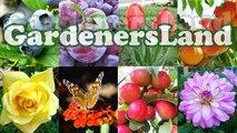 How To Grow A Pineapple Plant - Growing Fruit Trees Pineapples Plants - Backyard Gardening - Jazevox