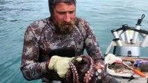 Ce plongeur mort un poulpe à l'oeil pour le neutraliser