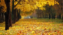 fall background video5
