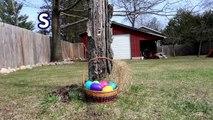 DOGS EASTER EGG HUNTING   Huskies Hunt for Easter Eggs   Husky Easter Egg Hunt
