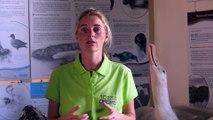 Les mesures de biosécurité dans la réserve naturelle des terres australes françaises