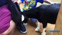 ANIMALS POOPING AT THE ZOO Kid at the ZOO Funny Family Fun Trip to Petting Farm Animals for Children