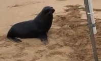 Woman Reels In Fish, Gets Confronted By Angry Sea Lion That Would Like Its Fish Back