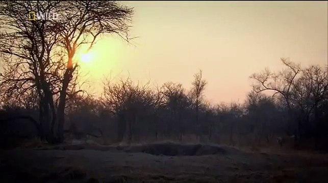 Big Cats Of The Timbavati Blood Ties (Wildlife Documentary)