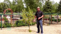 Tips and Tricks On How To Stake A Tree  (Gardening Tips And Tricks)
