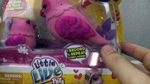 Little Live Pets Owl and Baby Toy Review tweet talking singing bird interive toy