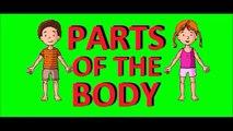 parties du corps en anglais - parties du corps