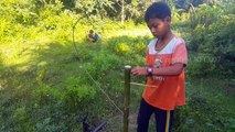 Awesome Quick Bird Trap (That Work 100%) - Birds Trap Alive In Cambodia Use by Smart Boys