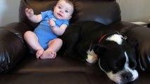 Ce chien ne va pas apprécier que bébé se lache à coté de lui... regardez sa tête!