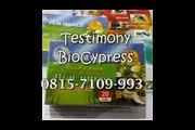 0815-7109 993 | Jual BioCypress Bali, Obat Herbal Asam Urat