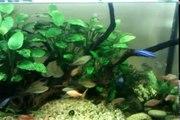 Как правильно кормить аквариумных рыбок! Очень познавательное видео