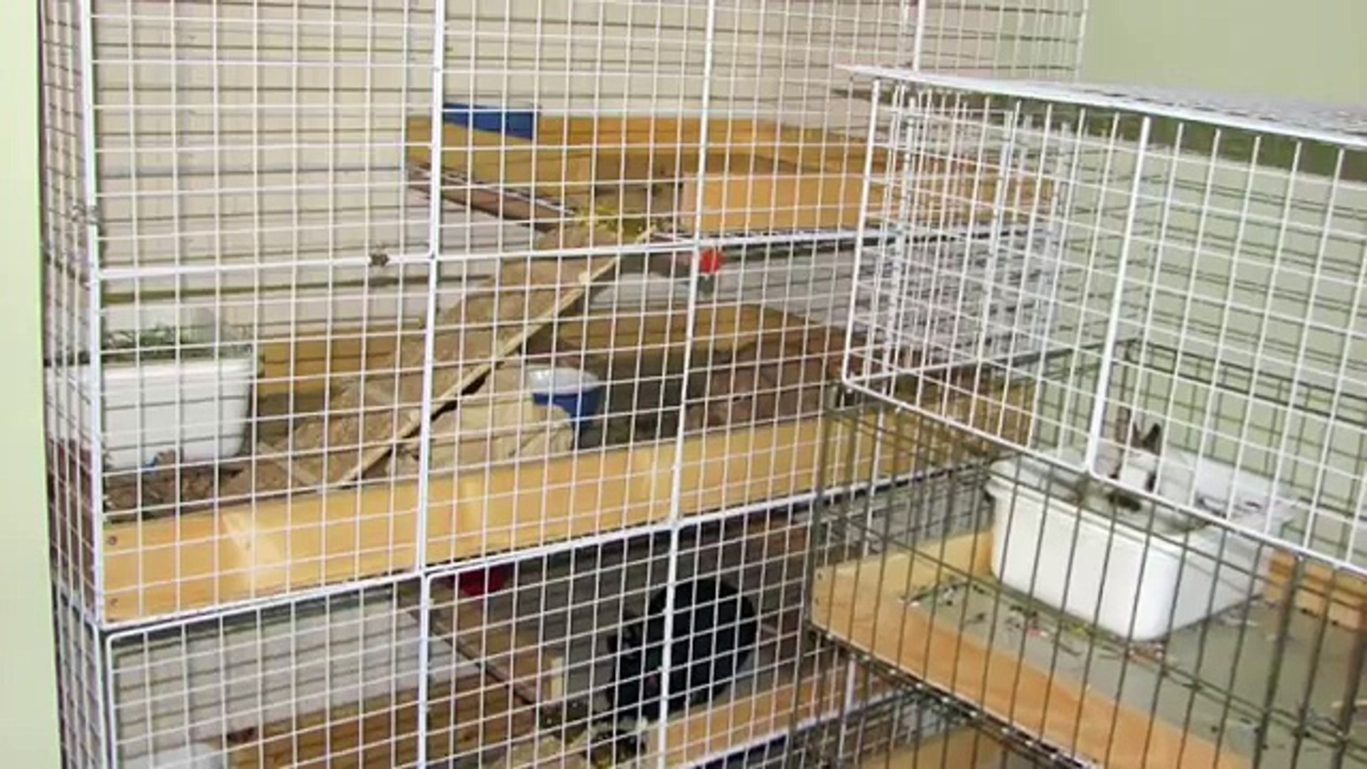How To Build Your Own Nic Rabbit Condo
