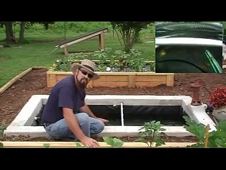 How we add Freshwater Prawns / Shrimp to our Aquaponics System