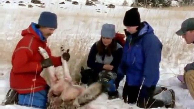 Wolf Pack Full Documentary