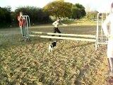 obstacle mon chien