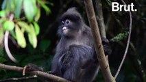 Anticipation : si la forêt amazonienne disparaissait complètement
