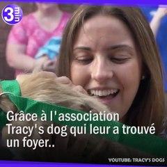L'association Tracy's Dog a sauvé plus de 3700 chiens !