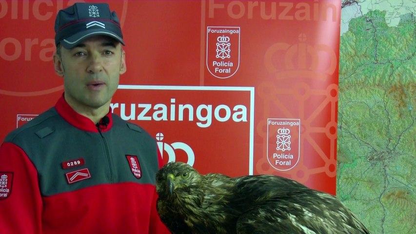 La Policía Foral de Navarra denuncia por vender en internet un águila real disecada