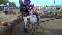 Petting ZOO at the Farm Feeding Horses and Goats Learn Animal Names for Kids