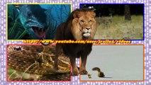 leão vs crocodilo