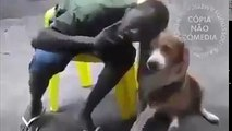 nani. omaiwa. DOG DOES A COMBO. DOG BITES HIS FACE.
