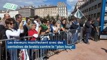 Lyon : des centaines d'éleveurs manifestent avec leurs brebis contre le futur plan loup