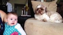 Ce chien sait comment calmer ce bébé en pleurs