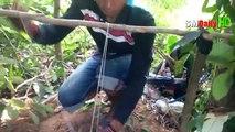 Amazing Quick Rabbit Trap in Cambodia - Best Rabbit Trap Homemade - Best Rabbit Traps (Work 100%)