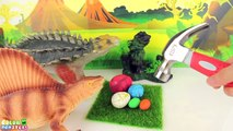 Dinosaurs Surprise Eggs! Dino Baby water Growing. Learn Dinosaurs Eggs Toys 공룡 알 Learning dinosaur