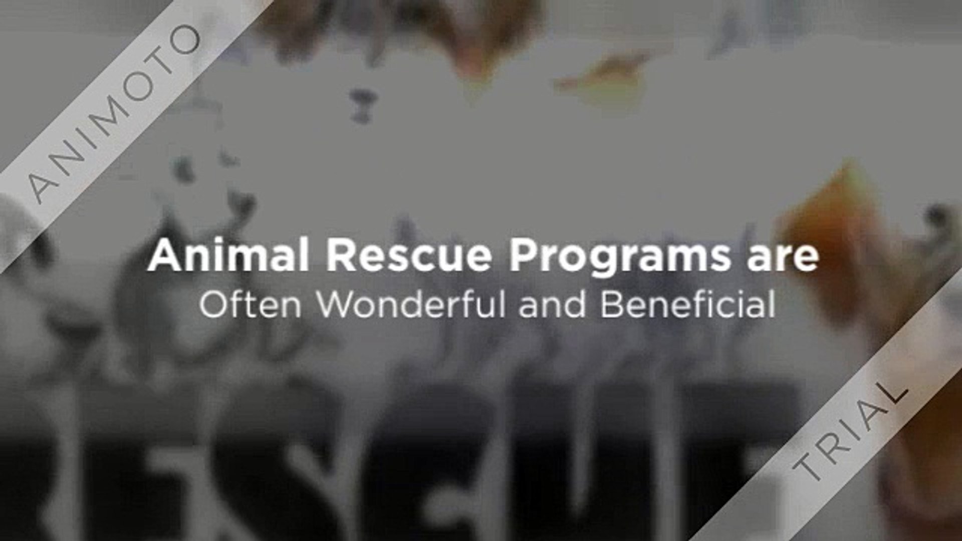 Boston Animal Rescue