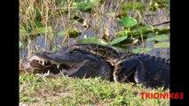 Serpientes gigantes: TITANOBOA REAL – Las serpientes mas grandes del mundo
