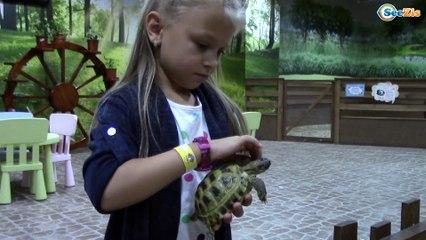 ВЛОГ Контактный Зоопарк для детей. Ярославу ударила Коза / Кормим, гладим, играем с животными