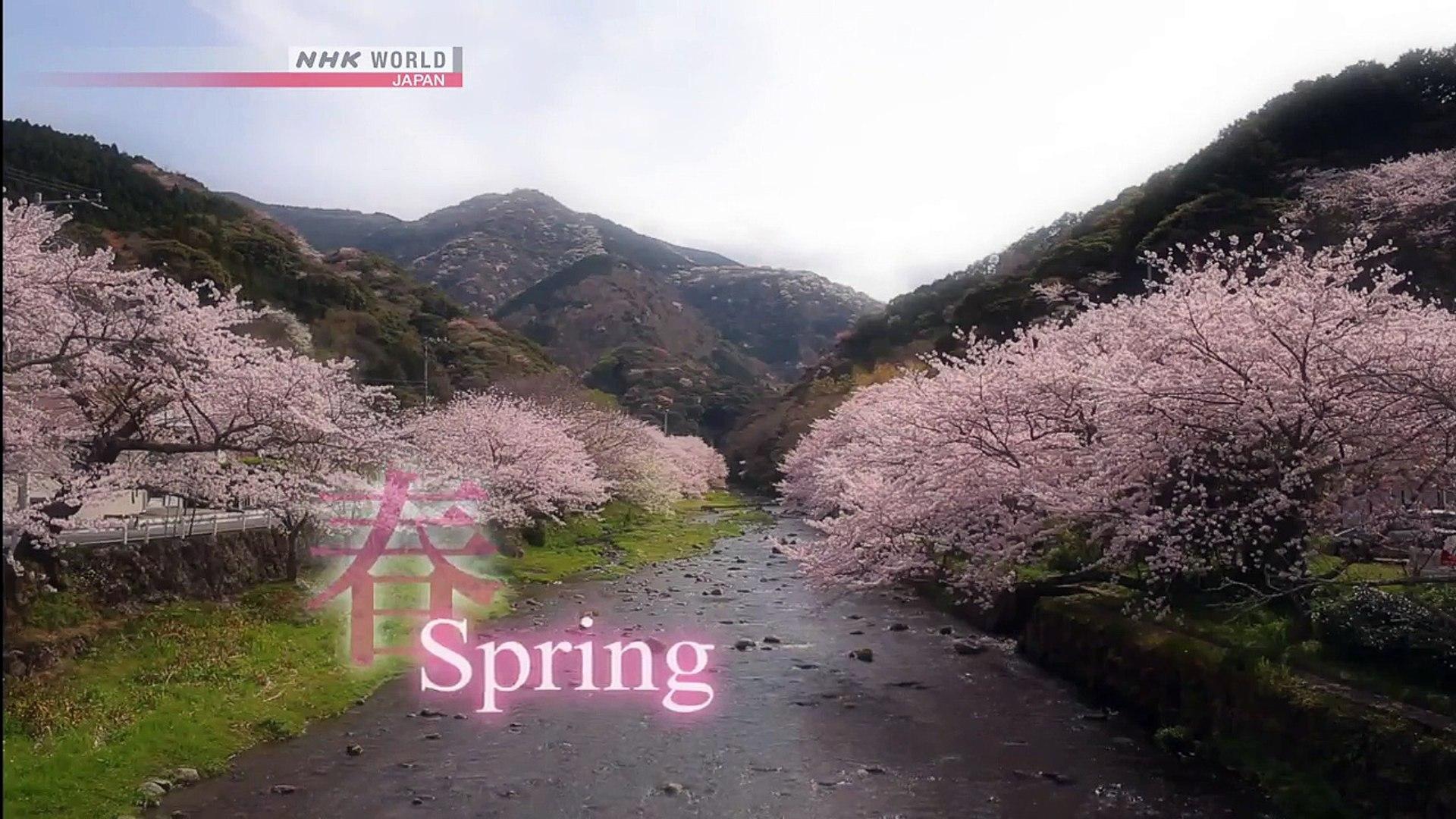 Spring Journey in Izu, Mt Fuji - CYCLE AROUND JAPAN - Video On Demand - NHK  WORLD - English