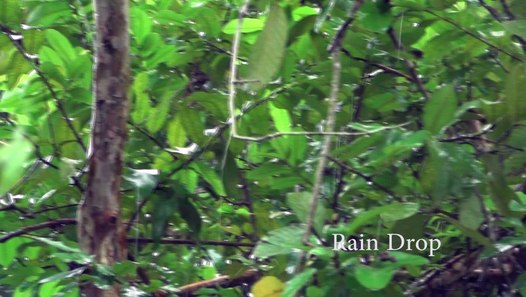 Relaxing Music With Rain Video And Sound Video Dailymotion