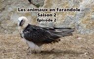 Les animaux en farandole: saison 2: épisode 2