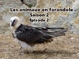 Les animaux en farandole: saison : 2: épisode 2