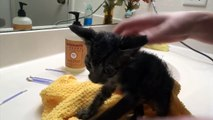 New Foster Kittens Get Baths! So Many Fleas! Five Weeks Old!