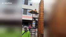 Couple produce huge tower of steamed buns