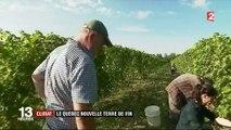 Conso : le réchauffement climatique rend possible la viticulture au Québec